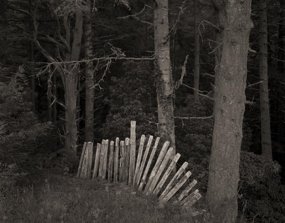 Fence, Ferguson Gulch, 1995