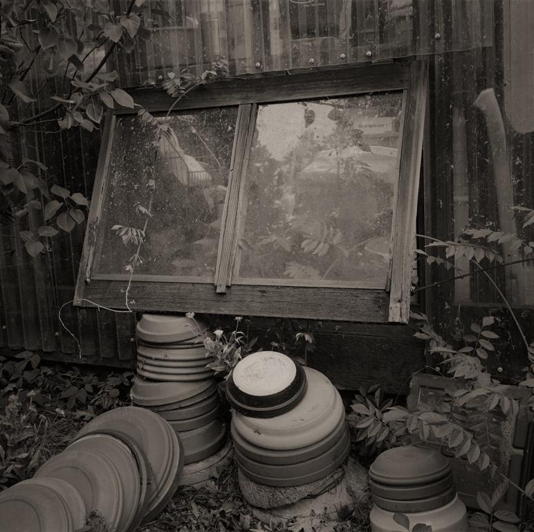 Pamela's Garden #1, 2014