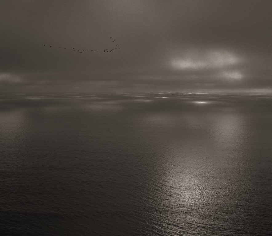 Pelicans, September, 2014