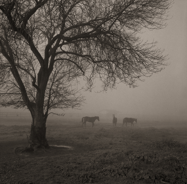 Three Horses, San Joaquin Valey, 2006